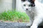 東京都・銀座で猫だらけのぶらり旅レポート