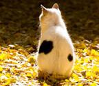 東京都・池袋で猫いっぱいのぶらり散歩レポート