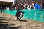 千葉県・成田ゆめ牧場で、ワンコだらけの「犬祭り」開催!!