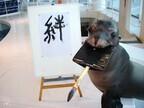 茨城県・アクアワールド大洗水族館で、アシカの書き初めなど縁起物イベント