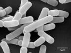 雪印メグミルク、ガセリ菌SP株のインフルエンザウイルス感染予防効果を発表