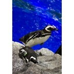 東京スカイツリータウンのすみだ水族館で、ペンギンたちに会ってきた
