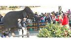 宮崎県・宮崎市フェニックス自然動物園で、ゾウと一緒に豆まき!