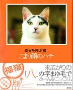 大きな八の字まゆ毛! 商店街のアイドル猫の写真集発売
