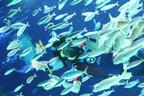 癒し系の小さなマンボウたち!サンシャイン水族館レポート