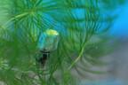 東京都・武蔵野市にある水生物園で、水中に巣を作る不思議なクモを見てきた
