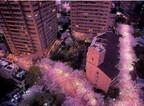 東京都港区のアークヒルズで「桜まつり」! マルシェにカレーに音楽も