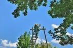 高さ10mのはしごの上で獅子舞が踊る! 「はしご獅子舞」が開催-千葉県