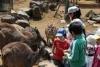 ロバやカンガルーの飼育体験をしよう! 静岡県・伊豆シャボテン公園で実施