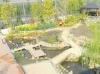 """京都府・京都水族館でメダカやアメンボなど""""里山のいきもの""""に触れる企画展"""