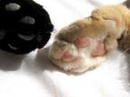 指が6本ある猫、「ヘミングウェイ・キャット」って知ってる?
