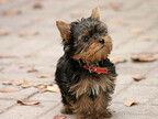 散歩中、犬のフンを上手に処理する方法