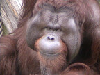 神奈川県・よこはま動物園ズーラシアで日本初「リアル謎解きゲーム」開催!