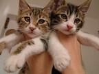うちの猫が1匹で寂しそう…。もう1匹、猫を家族に迎えたほうがいい?
