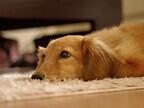 一人暮らし! マンションで犬を飼う方法