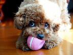 犬の歯磨きを上手にする方法