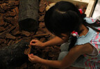 """東京タワーで「大昆虫展」開催 -夏休みの自由研究に役立つ""""昆虫教室""""も"""