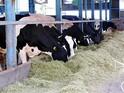 家畜人工授精師とは?-畜産の未来を支える国家資格