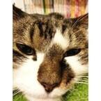 猫ストーカーってどんな「職業」? 東京都内で活動するプロを取材