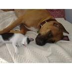 【エンタメCOBS】犬と猫、飼うならどっち?