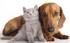 猫系男子vs.犬系男子、あなたはどっち派?『溺れるナイフ』で「ダメ恋愛適性」チェック