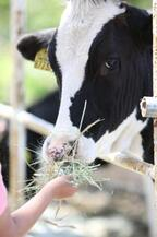 1頭あたり500リットル/日!牛のゲップは温室効果ガス5%分に匹敵するって知ってた?