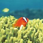 海でやらかしたオレの武勇伝!「牡蠣で背中が血だらけ」「パンツ流されスッポンポン」