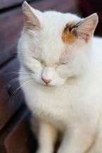 ぜんそく持ちの人は猫アレルギーになる確率が3割増し―アメリカ研究