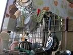 調理器具の「汚れ」や「臭い」を簡単に落とす方法―身近なもので除菌消臭「グリルは重層やお茶で」
