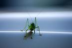 絶対に食べなくてはいけない時に食べたい世界の昆虫食1位「カタツムリ」