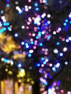 今年の冬はここがお薦め!地方の人気イルミネーション5選「はままつフルーツパーク時之栖(静岡県)」