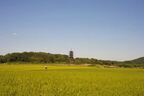 「都道府県で唯一イオンがない県」「TVチャンネルが2局」自虐ネタにしたくなる地元の田舎自慢