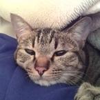 わざと? 来客に向かって猫が「ふわぁぁぁ」とあくびするのはなぜだ!?