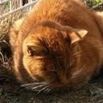ウチの猫、寝るときに目が半開きだけど大丈夫なの?
