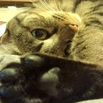 気づけばペロペロ……猫が飼い主の手や顔を舐めまくるのはどうして?