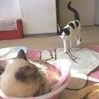あれっ、嫌われてる!? 目が合うとフッとそらす猫のホンネ「あなたとケンカする気はありません」