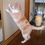 「猫にとって危険」なリビングとは?「フローリング:猫の足腰に負担」「電気のコード:感電の恐れ」