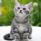 言うほど猫が出てこないドラマ『やっぱり猫が好き』は今見てもやっぱりおもしろい!