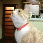 猫が「ニャアーオ」としつこく鳴くのはどんなとき? 「ごはんちょうだい」「遊ぼうよ」