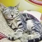 知っていますか? 「猫カフェ」へ行くとき、気をつけたほうがいいこと