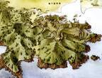 お城マニアをうならせる地方の城5選 !「謎の城」も!?―武田氏滅亡を決定づけた城 「高天神城」