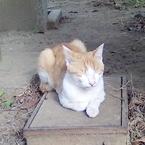 猫の萌え仕草! 「ごめん寝」ってどんなポーズ?