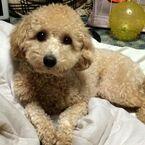 家族みんなでゴホゴホ! 人の風邪が愛犬にうつることはあるの?