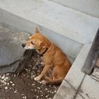 夜中にワンワン! 愛犬の鳴き声に近所からクレームがきたらどうする?