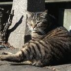 成人式を迎えることも! 猫の平均寿命が年々伸びているらしい