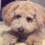 愛犬の健康のために覚えておきたい! 必要な栄養素、犬と人間の違いとは?