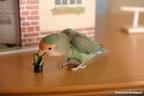 愛鳥家にオススメの一冊! 簡単組み立てバードハウスがついたインコの可愛い写真集が発売