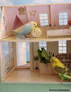 鳥飼いさん集まれ♪ この1冊でバードハウスもオモチャもぜーんぶそろっちゃう『バードハウスでインコと遊ぼう』発売!
