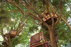 ツリーハウスやキッチンカー、ハンモックなどワクワクがいっぱい! 森に囲まれたカフェが千葉にオープン