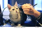 """猫写真家ケニア・ドイさん直伝!  """"じゃまねこ""""を撮影するコツを公開"""